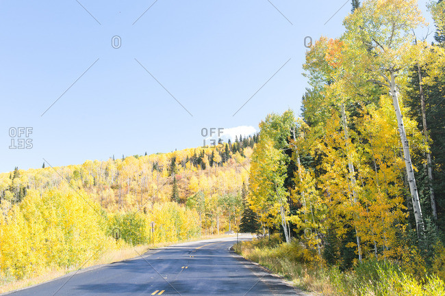 Two lane highway through forest with fall leaves