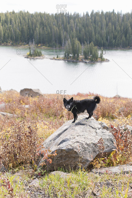 Dog standing on a boulder in front of a lake
