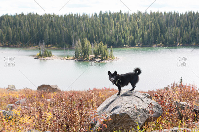 Dog standing on a rock in front of a lake