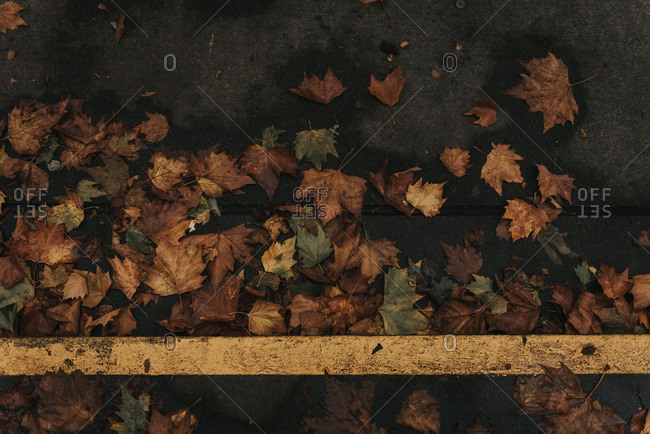 Fallen leaves on a road