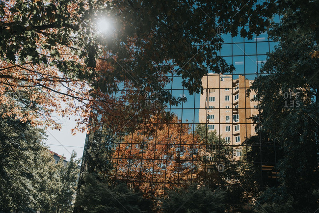 Trees and building reflected in glass
