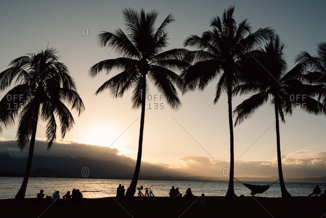 Silhouette of people and palm trees overlooking ocean at sunset