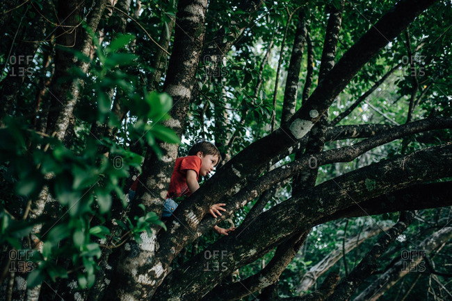Boy climbing tree in the forest