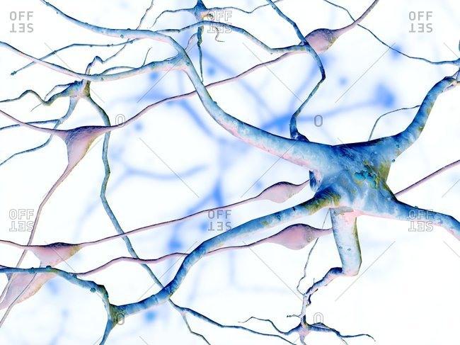Nerve cells, computer artwork