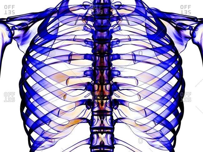 Ribcage, computer artwork