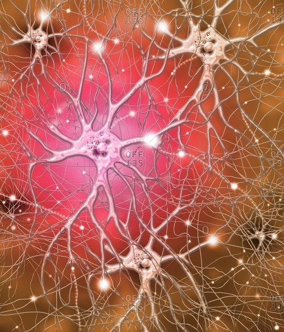 Nerve cells, artwork