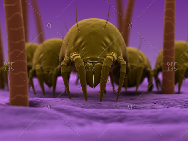 Dust mites, artwork
