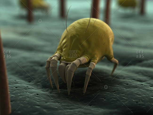 Dust mite, artwork