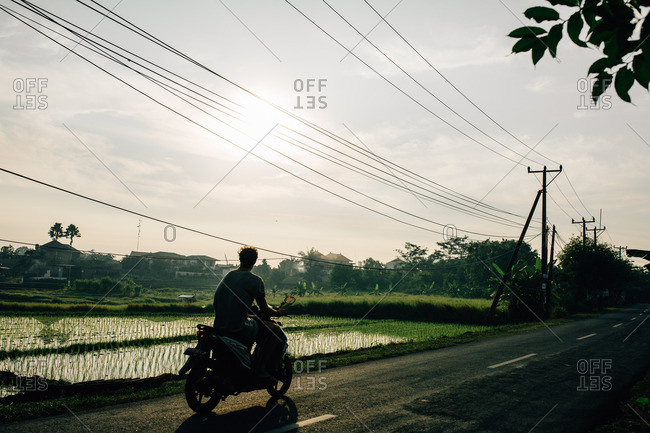 Canguu, Bali, Indonesia - August 30, 2016: Bali, Indonesia - August 30, 2016: Man on a motorized scooter driving past rice paddies
