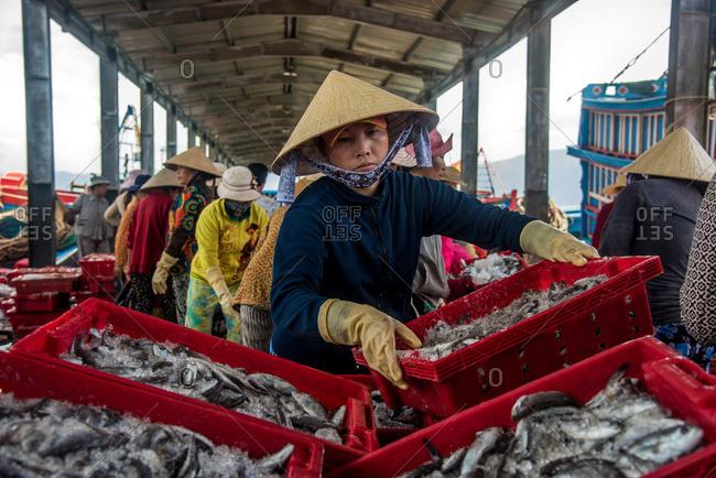 Nha Trang, Vietnam - September 6, 2016: Woman sorting seafood market in Nha Trang, Vietnam