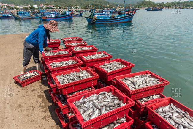 Woman looking at fish in crates at a market in Nha Trang, Vietnam