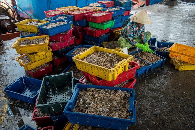 Workers sorting seafood market in Nha Trang, Vietnam