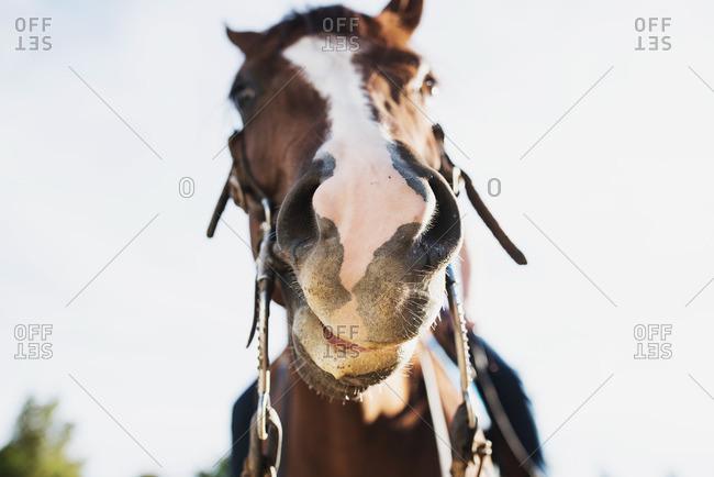 Up-close portrait of a horse's muzzle