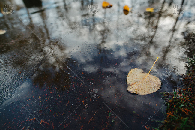 Fallen leaves on water surface