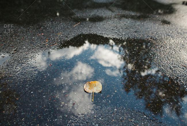 Fallen leaf on water on road