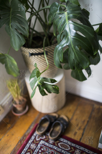 House plant in the corner of a room
