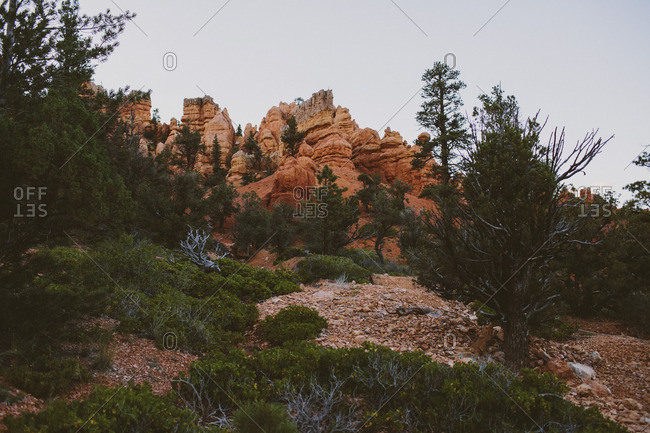 View of Bryce Canyon with red rocks and trees