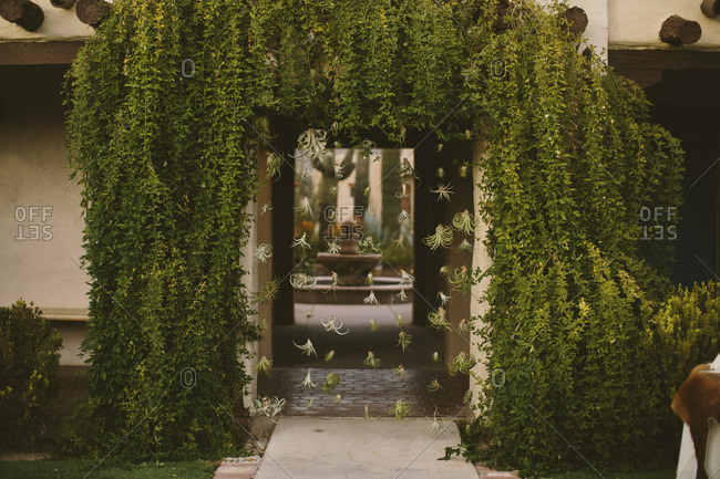 Vine covered entryway with air plants as curtain