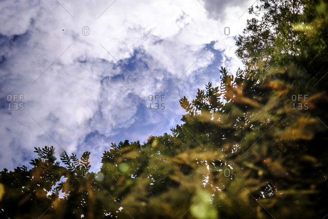 Tree branches under cloudy sky