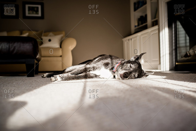 Dog sleeping soundly in sunlight