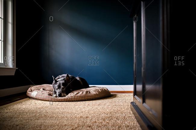 Dog sleeping on cushion in sunlight