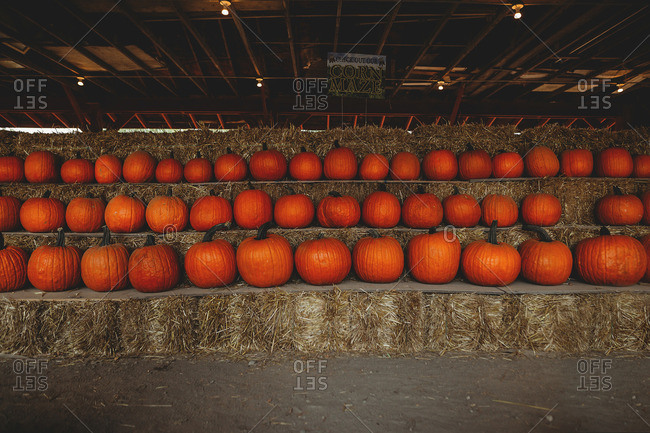 Pumpkins on hay bales in barn