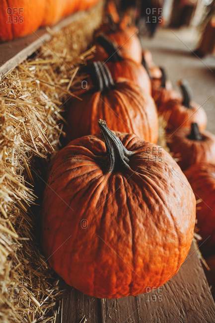 Close up of decorative pumpkin on hay