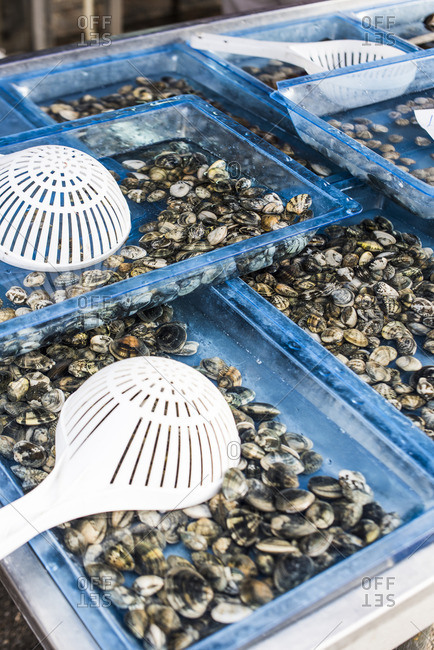Trays filled with fresh caught clams