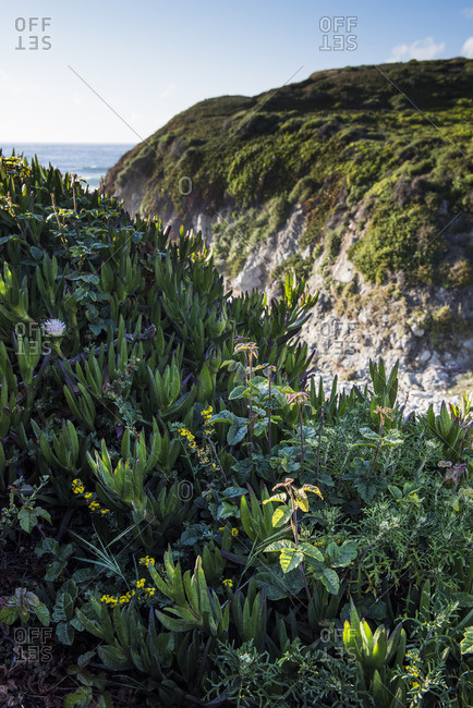 Vegetation on oceanside mountain