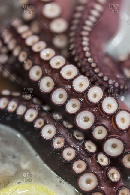 Close up of a boiled octopus