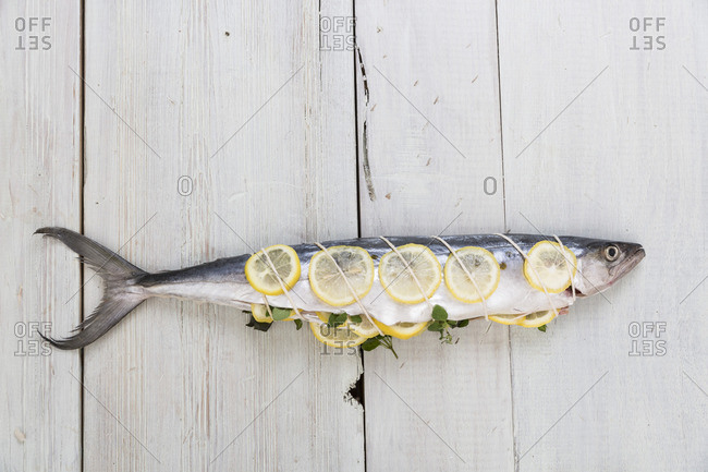 Lemon slices tied around a fish with a twine