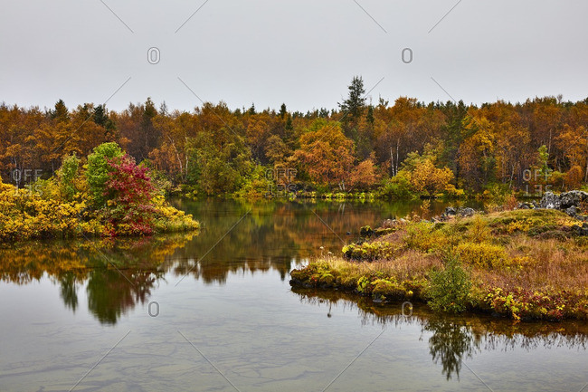 Fall foliage along Icelandic lake