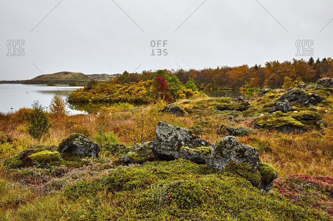 Fall foliage along an Icelandic lake