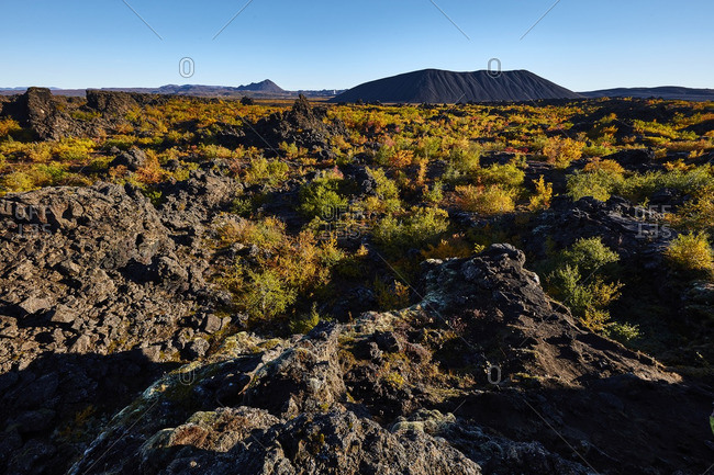 Volcanic field in autumnal Iceland