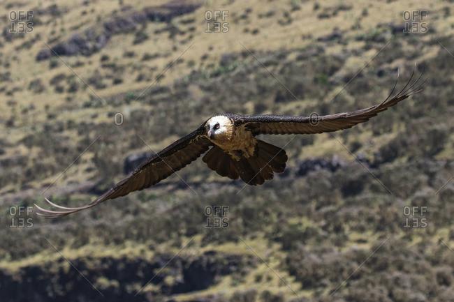 Eagle flying in sky