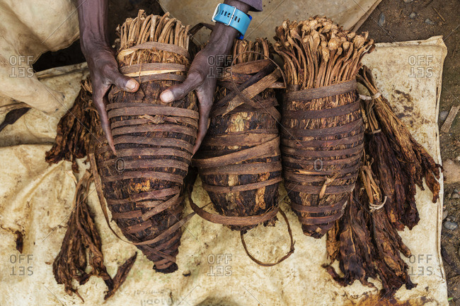 Hands holding bundle of tobacco
