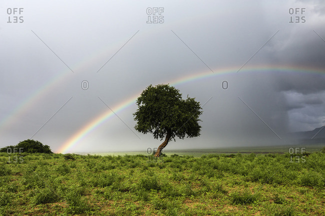 Double rainbow over tree in landscape