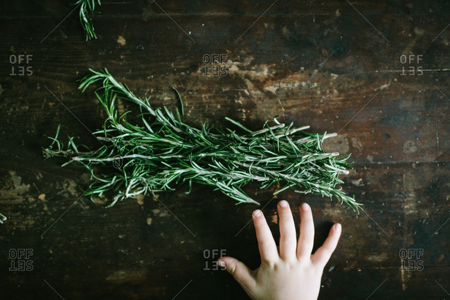 Child's hand reaching for rosemary on a wooden table