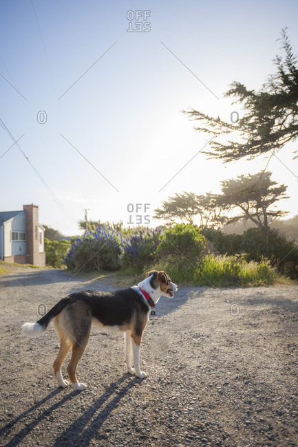 Dog standing on a gravel path at sunset
