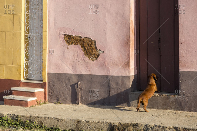Dog waiting at the door of a colorful house
