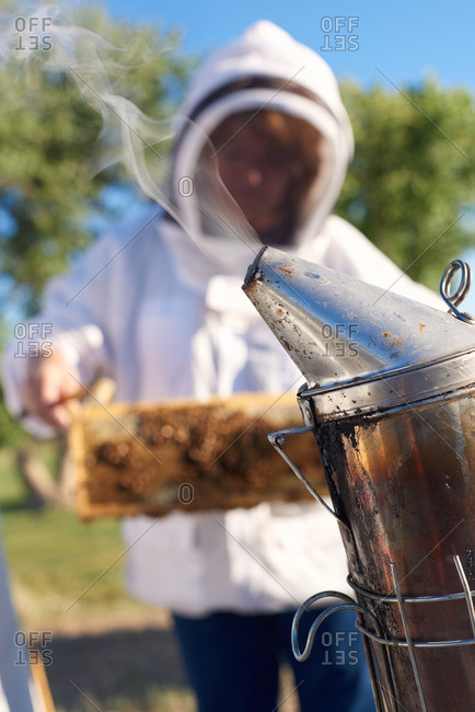 Smoking bee keeper can tool with the bee keeper examining a frame of bees in the background.