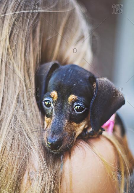 Girl holding a dog on her shoulder