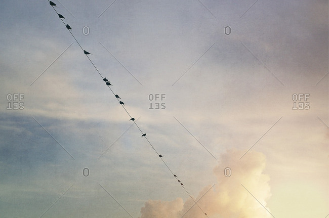 Many birds perched together on a wire