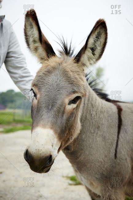 Close up of donkey