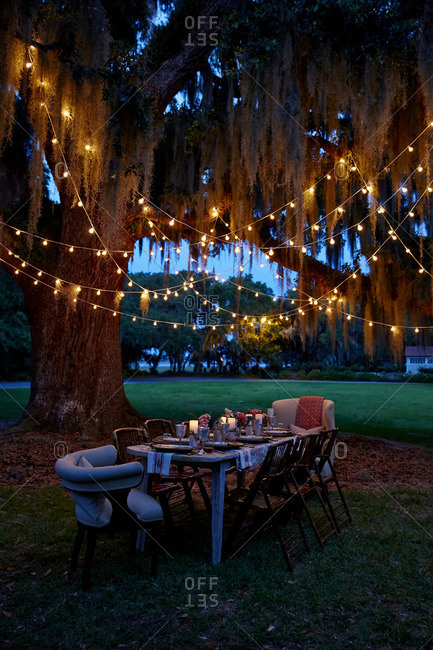 Moss and lights in tree above table set for party