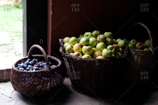 Fresh-picked apples and plums in rustic wicker baskets