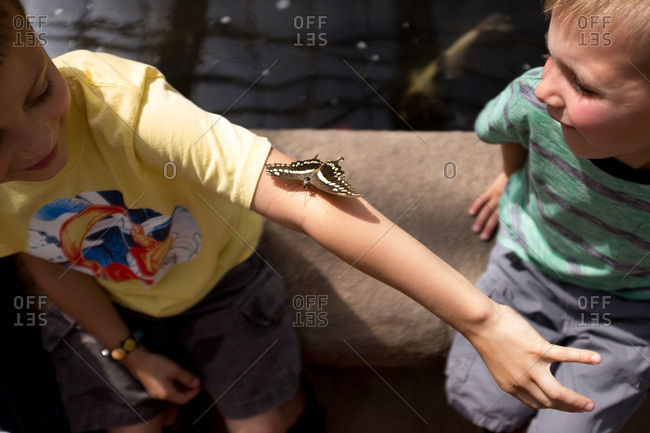 Little boy showing his brother a butterfly on his arm