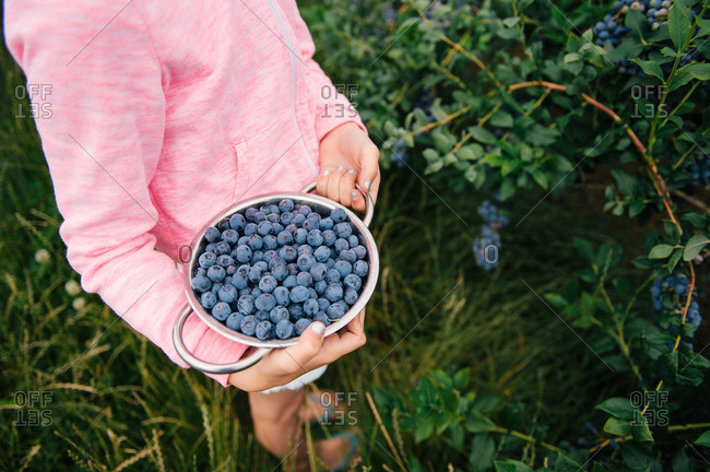 Girl in a blueberry patch holding a bowl of fresh berries