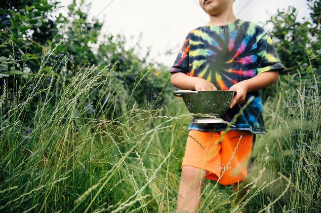 Boy carrying a bowl of blueberries in a patch