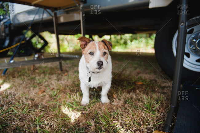 Dog standing under a table beside a camper